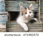 Stock photo kitten photo 471982573