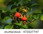 dog rose berries | Shutterstock . vector #472027747