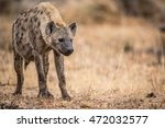young spotted hyena in the... | Shutterstock . vector #472032577