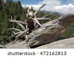 Fallen Tree An Boulder On The...