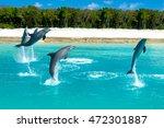 Triple Dolphin Jump  Bahamas