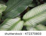 line of green leaf   Shutterstock . vector #472370803