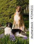 Laying Beautiful Dogs In Garde...