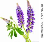 violet flower of a lupine on a... | Shutterstock . vector #472473253