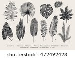 Set Leaf. Exotics. Vintage vector botanical illustration. Black and white. | Shutterstock vector #472492423