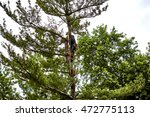 Professional Tree Trimmer...
