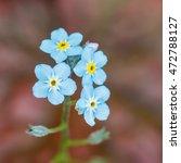 a macro shot of some blue... | Shutterstock . vector #472788127