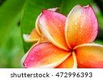 beautiful single flowers... | Shutterstock . vector #472996393