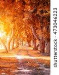 Beautiful Autumn Park In Sunny...