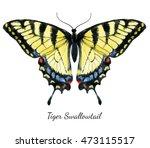 Watercolor  Illustration Tiger...