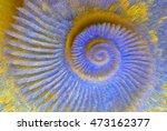 closeup of an ammonite...   Shutterstock . vector #473162377