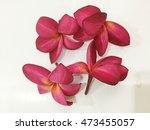 red flowers | Shutterstock . vector #473455057