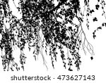 branch of a birch is isolated...   Shutterstock . vector #473627143