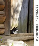 Small photo of Beautiful fluffy black and white cat with yellow eyes and white whiskers sitting threshold of yard