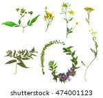set of wild flowers and plants... | Shutterstock . vector #474001123