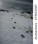 deer prints heading towards lake | Shutterstock . vector #474023587