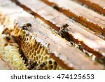 Honeycomb With Bees And Honey