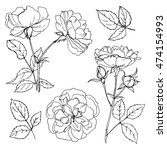 roses line drawn on a white... | Shutterstock .eps vector #474154993