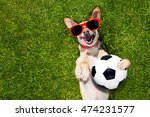 Soccer  Chihuahua Dog Holding ...