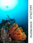 sea scape at ambon  maluku ... | Shutterstock . vector #47427295
