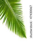 Leaves Of Palm Tree With...