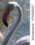 Small photo of Camargue: pink flamingo near Saintes-Maries-de-la-Mer, France