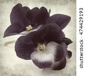 Small photo of textured old paper background with blue and white african violet