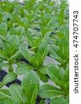 organic hydroponic vegetable...   Shutterstock . vector #474707743