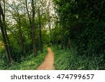 path in the wild vegetation | Shutterstock . vector #474799657