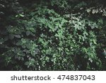 vintage photography of green... | Shutterstock . vector #474837043