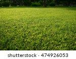 green grass    Shutterstock . vector #474926053