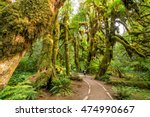 hoh rain forest in olympic... | Shutterstock . vector #474990667