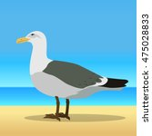 Gull . Sea Bird Wildlife In...