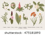 Exotic flowers set. Botanical vector vintage illustration. Design elements. Colorful. | Shutterstock vector #475181893
