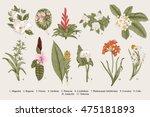 Exotic flowers set. Botanical vector vintage illustration. Design elements. Colorful. | Shutterstock vector #475181893