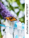 Small photo of Small Tortoiseshell butterfly (Aglais urticae) resting on clothes pegs on a washing line.