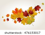 Colorful Autumn Maple Leaves ...