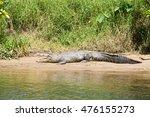 saltwater crocodile  daintree... | Shutterstock . vector #476155273