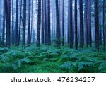 Coniferous Forests  Ferns And...