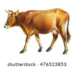 Cow Drawing. European Cow. ...