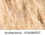 grass on the field   Shutterstock . vector #476580937