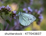butterfly insect floral summer... | Shutterstock . vector #477043837