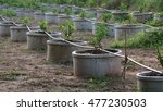 lime plant | Shutterstock . vector #477230503