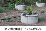 lime plant | Shutterstock . vector #477239803