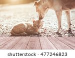 Stock photo cat and dog 477246823