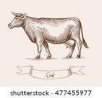 cow. illustration in vintage... | Shutterstock . vector #477455977