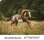 Brown Horse With Large White...
