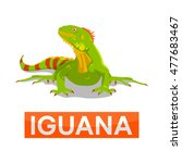 green iguana without line | Shutterstock .eps vector #477683467