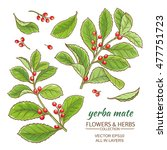 vector illustration with yerba... | Shutterstock .eps vector #477751723