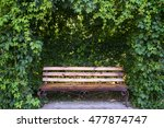 Bench In Garden Under Curly...